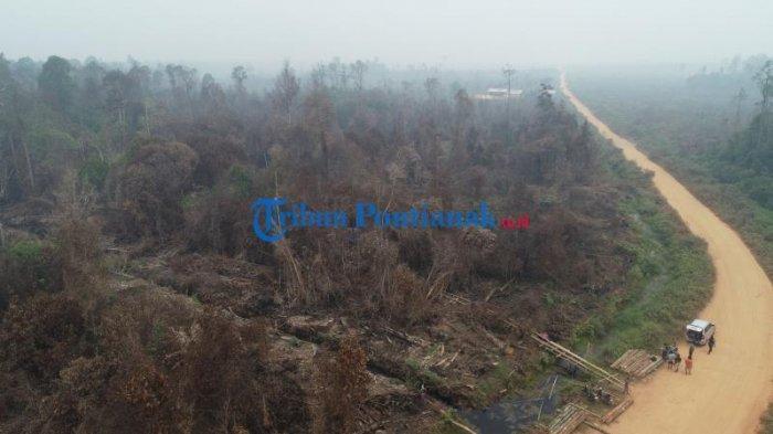 FOTO DRONE: Jalur Menuju Hutan untuk Mengambil Kayu Diduga Ilegal Logging di Teluk Bakung Kubu Raya - jalur-menuju-hutan-untuk-mengambil-kayu-ilegal-logging-di-desa-teluk-bakung-4.jpg