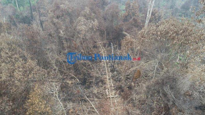 FOTO DRONE: Jalur Menuju Hutan untuk Mengambil Kayu Diduga Ilegal Logging di Teluk Bakung Kubu Raya - jalur-menuju-hutan-untuk-mengambil-kayu-ilegal-logging-di-desa-teluk-bakung-5.jpg