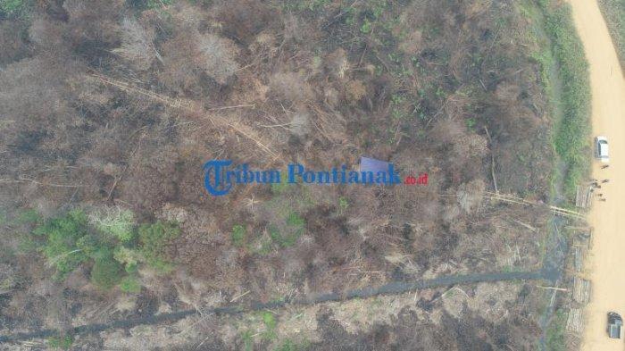 FOTO DRONE: Jalur Menuju Hutan untuk Mengambil Kayu Diduga Ilegal Logging di Teluk Bakung Kubu Raya - jalur-menuju-hutan-untuk-mengambil-kayu-ilgal-logging-di-desa-teluk-bakung-1.jpg