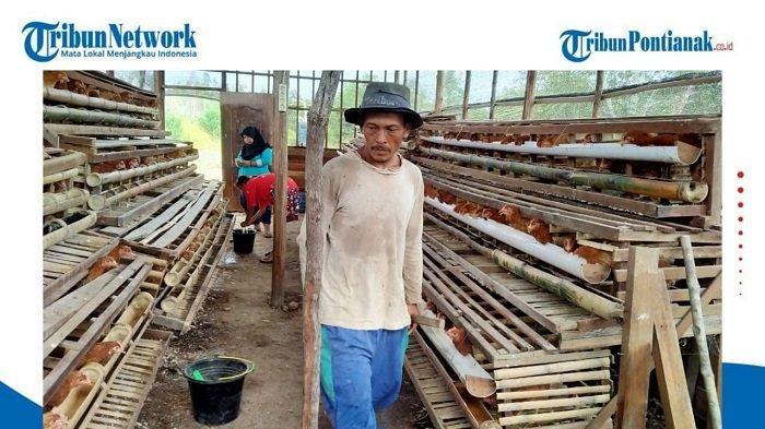 Ternak Ayam Petelur, Mendorong Desa Mandiri Pangan di Kalimantan Barat - kelompok-program-mata-pencaharian-alternatif-binaan-sinar-mas-agribusiness-and-food.jpg