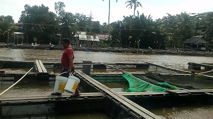 Sungai Terinterusi Air Laut, Pemkab Mempawah Nilai Belum Ada Ikan Yang Mati Signifikan