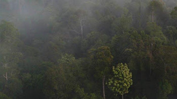 KISAH Perjalanan Deki Tersesat Selama 5 Hari, Perkampungan 'Gaib' di Tengah Hutan Belantara Sambas