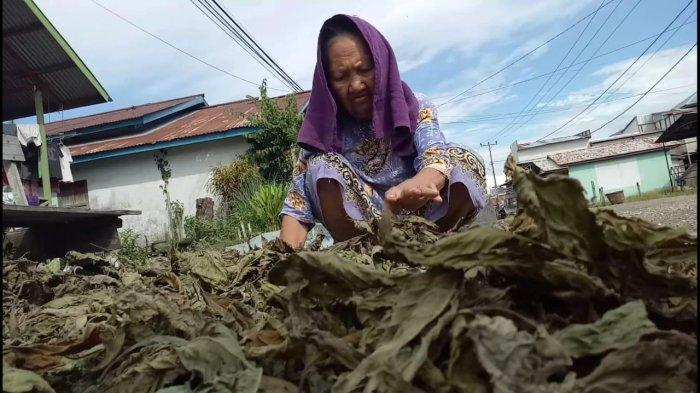 Gubernur Sutarmidji Dukung Keputusan Kementan Memasukan Kratom Sebagai Tanaman Bahan Baku Obat