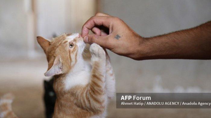 Dampak dan Bahaya Bagi Kucing Jika Diberikan Makanan Sisa