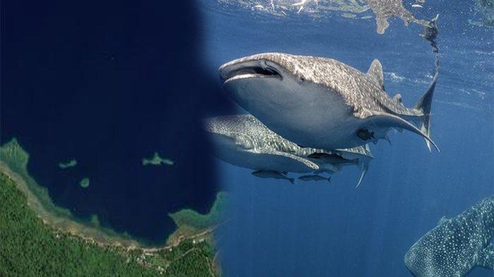 LAUTAN Kwantisore Terletak di Benua ? Lebih 50 Ekor Hiu Paus Dapat Dijumpai di Lautan Kwantisore