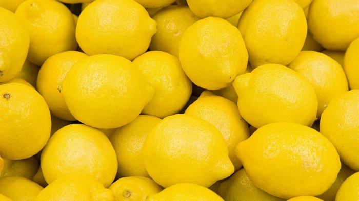 Tips Mudah Menanam Lemon dari Bijinya