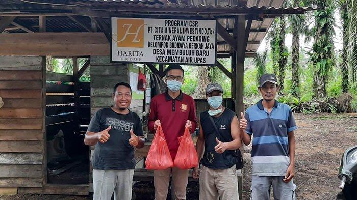 CITA Komitmen Kembangkan Ekonomi Produktif, Bantu Kelompok Ternak Ayam Pedaging Panen Perdana