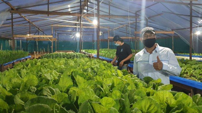 Petani Hidroponik Akui Listrik Dorong Pertumbuhan Bisnis Agrikultur