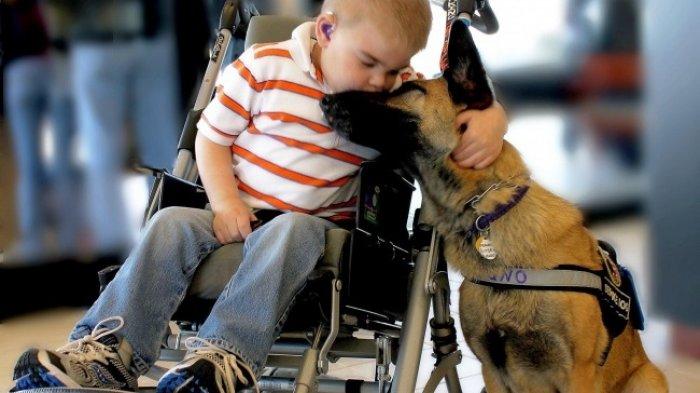 TERUNGKAP Alasan Kebiasaan Anjing Peliharaan Menjulurkan Lidah ke Wajah Tuannya