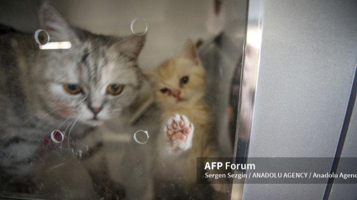 Lupa Tanggal Lahir Kucing Kesayanganmu? Berikut Cara Menghitung Usia Kucing
