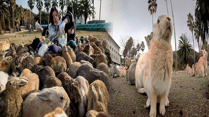 MALAPETAKA Surga Pulau Kelinci di Jepang, Peneliti Bongkar Penyebabnya