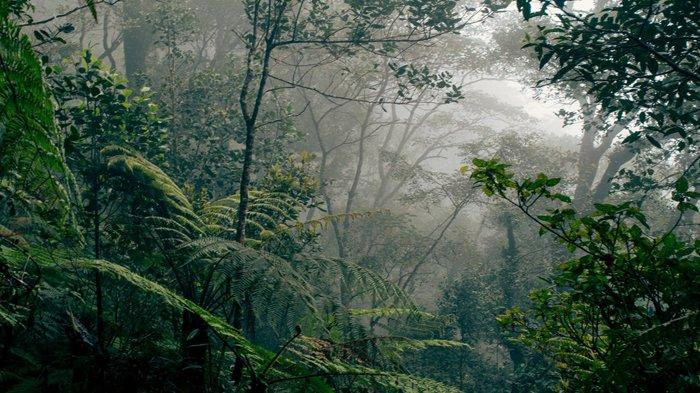 MISTIS Tengah Malam di Hutan Belantara Sambas, Deki Didatangi Gadis Kecil dan Minta Sesuatu
