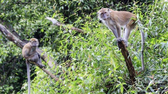 Mengapa Hewan Punya Ekor dan Apa Fungsinya?