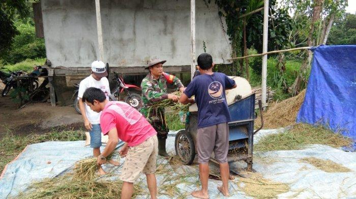 Motivasi Petani, Sertu Mulyadi Turun Ke Sawah
