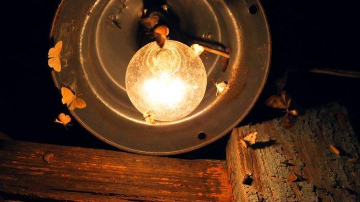 Musim Hujan! Cara Mudah Mengusir Serangan Laron di Rumah Tanpa Matikan Lampu