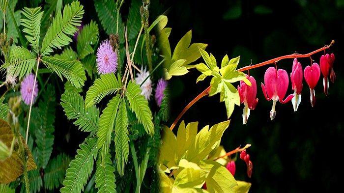 Nama Bagian Tumbuhan & Fungsinya, Dari Fungsi Akar Tumbuhan Hingga Fungsi Bakal Buah