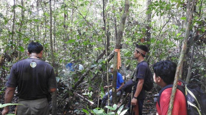 Bermalam di Hutan, Survei Sarang Orang Utan di Taman Nasional Gunung Palung