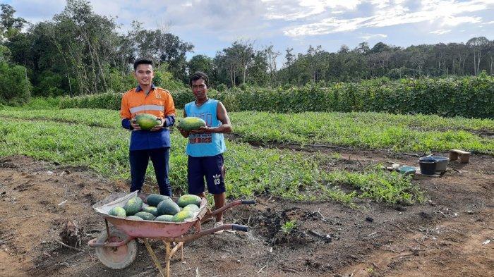 Masih Dilanda Covid-19, PT Cita Mineral Investindo Tbk Ajak Kelompok Tani Perbaiki Ekonomi Mayarakat