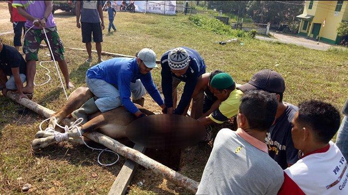 pemotongan-hewan-kurban-di-masjid-agung-sanggau.jpg