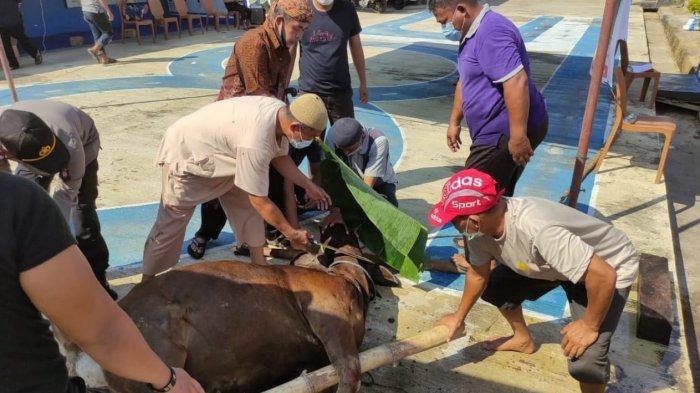 Polres Sanggau Lakukan Pemotongan Hewan Kurban, 3 Ekor Sapi dan Seekor Kambing