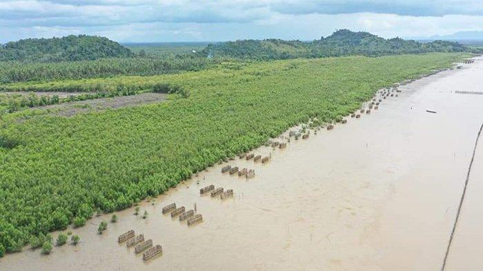 Hindari Abrasi Pantai, BPSPL Tanam 90 Ribu Bibit Mangrove di Pantai Selakau Sambas