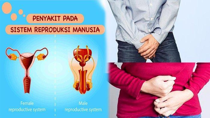 PENYAKIT Pada Sistem Reproduksi yang Dapat Mengakibatkan Menurunnya Kekebalan Tubuh