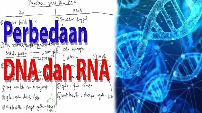 PERBEDAAN DNA dan RNA, Apa Itu DNA dan RNA ?