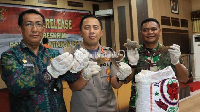 FOTO: Pengungkapan Kasus Perdagangan Gelap Sisik Trenggiling - perdagangan-sisik-trenggiling-1.jpg