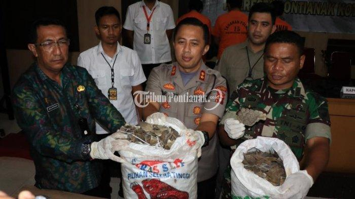 FOTO: Pengungkapan Kasus Perdagangan Gelap Sisik Trenggiling - perdagangan-sisik-trenggiling-5.jpg