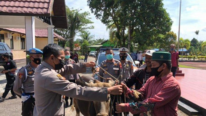Polres Melawi Salurkan 8 Sapi Kurban ke Masjid dan Pesantren di Kabupaten Melawi