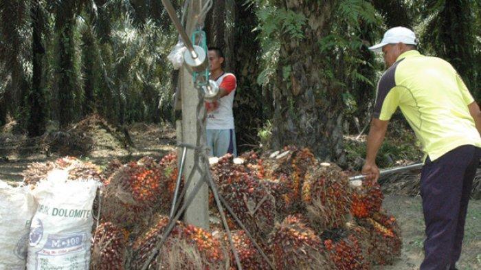 LAWAN Kebijakan Diskriminatif Uni Eropa Atas Sawit, Indonesia Ajukan Panel ke WTO soal Sengketa CPO