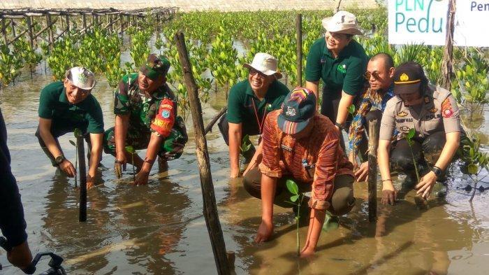 PLN Dorong Cinta Mempawah Mangrove Jadi Desa Wisata Unggulan