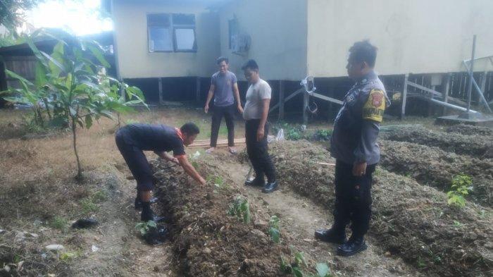 Personel Polsek Putussibau Utara Tanam Sayuran dan Buah di Lahan Kosong di Belakang Mapolsek
