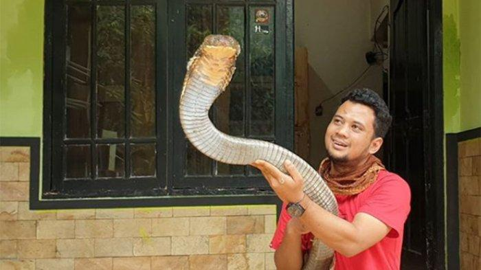 NASIB King Kobra Garaga Panji Petualang yang Ingin Dilepas, Pernah Ditawar dengan Harga Fantastis!