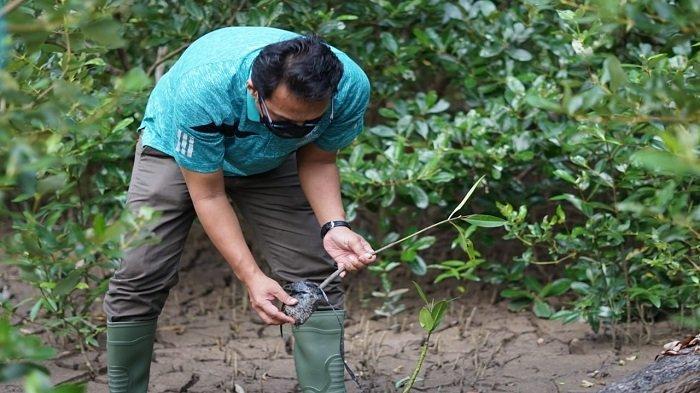 Jasa Raharja Kalbar Dukung Penanaman 1.800 Mangrove di Cinta Mangrove Park Mempawah - regy-s-wijaya-melakukan-penanaman-mangrove.jpg
