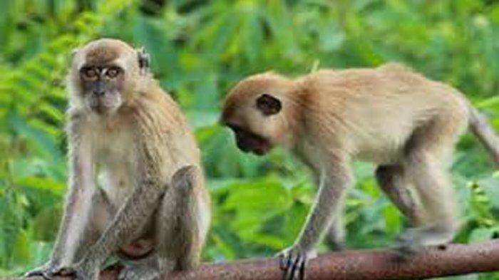 Ribuan Monyet Terinfeksi Virus Corona, Dokter di China Meninggal Akibat Terkena Virus Corona Baru