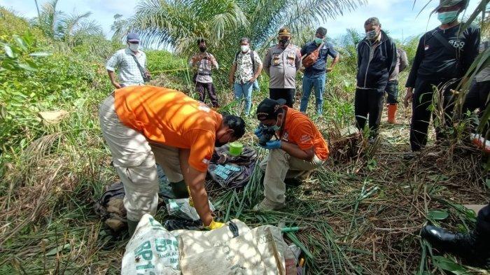 Penemuan Mayat Pria Tanpa Identitas di Perkebunan Kelapa Sawit di Noyan, Beberapa Organ Tubuh Hilang