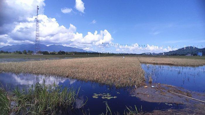 Petani Dusun Sidorejo Harap, Pemkab Kayong Utara Kontrol Pengelolaan Saluran Irigasi DAM di Begasing
