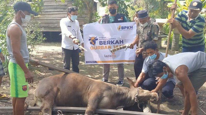 Kades Rantau Panjang Ucapkan Terimakasih Atas Penyaluran Hewan Kurban olehBPKH dan Lazismu Kalbar