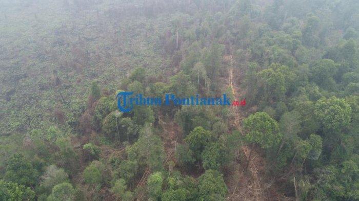 FOTO DRONE: Jalur Menuju Hutan untuk Mengambil Kayu Diduga Ilegal Logging di Teluk Bakung Kubu Raya - sebuah-jalur-menuju-hutan-untuk-mengambil-kayu-ilegal-logging-di-desa-teluk-bakung-2.jpg
