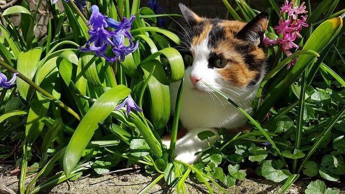 TIPS Merawat Tanaman Hias Agar Tidak Dirusak Oleh Kucing