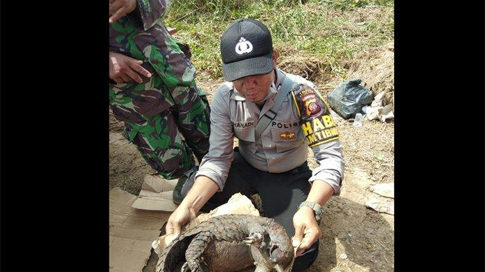 Seekor Trenggiling Ditemukan Mati di Lokasi Karhutla Desa Sungai Pelang Ketapang