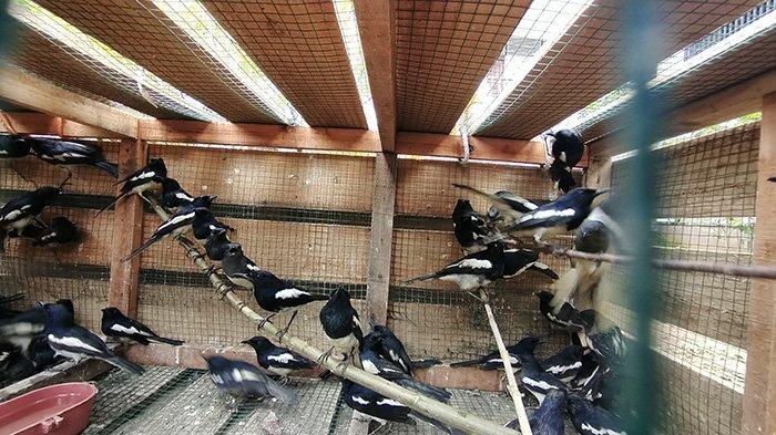 Tim Patroli Gabungan Pelabuhan Dwikora Gagalkan 110 Burung Tanpa Dokumen
