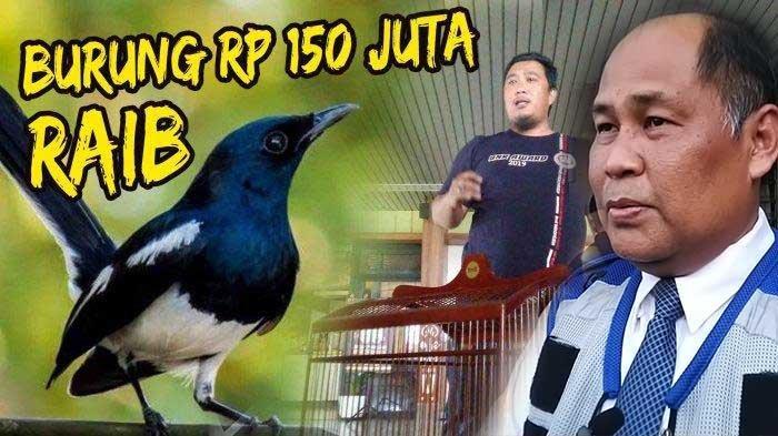 Sikap Garuda Indonesia Terkait Burung Kacer Rp 150 Juta Milik Anggota Kicau Mania Hilang di Bagasi