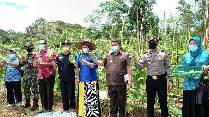 Hadiri Panen Perdana di Nanga Mahap Sekadau, Subandrio: Pemkab Dukung Sektor Pertanian