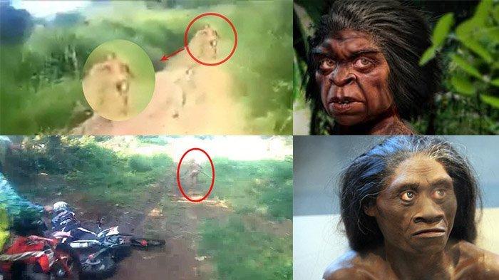 Pencari Getah Gaharu Intip Aktivitas Suku Mante, Inilah Ciri-cirinya