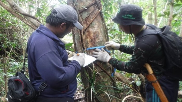 Yuk Intip Distribusi dan Populasi Sebaran Orangutan di Kawasan Lindung Sungai Paduan