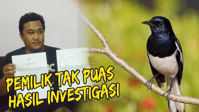 Tak Puas Hasil Investigasi, Pemilik Burung Kacer Rp 150 Juta Pastikan Datangi Kantor Pusat Garuda