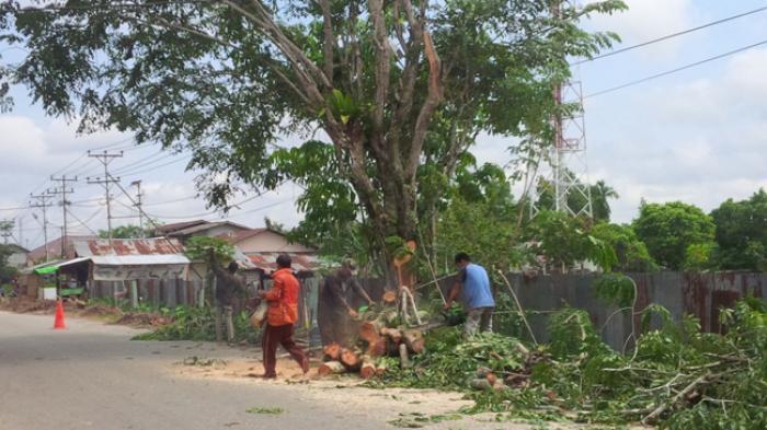 Bolehkah Tebang Pohon di Tepi Rumah