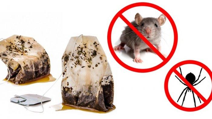 TRIK Memasang Perangkap Tikus yang Benar, Ketahui Faktanya Berikut Ini